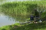 Klątwa kaczych dołków. Wędkarze rejterują z łódzkiego PZW