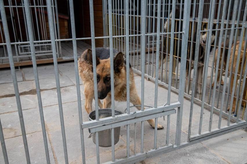 Te psy czekają na dom!