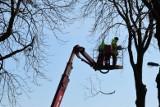 Utrudnienia na Drodze Krajowej nr 80. Trwa wycinka drzew