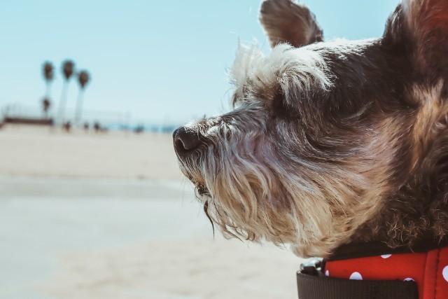 Nie wiesz, jak nazwać swojego pupila? Zastanawiasz się, jakie imię dla psa będzie właściwe? Mamy dla Ciebie kilka podpowiedzi!Przejdź dalej >>>