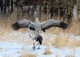 Pomorscy birdwatcherzy. Co widzą, obserwując życie ptaków?