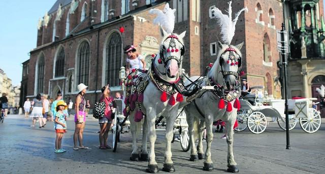 Jeszcze dzień przed wprowadzeniem zakazu postoju na Rynku Głównym konie stały tu w pełnym słońcu