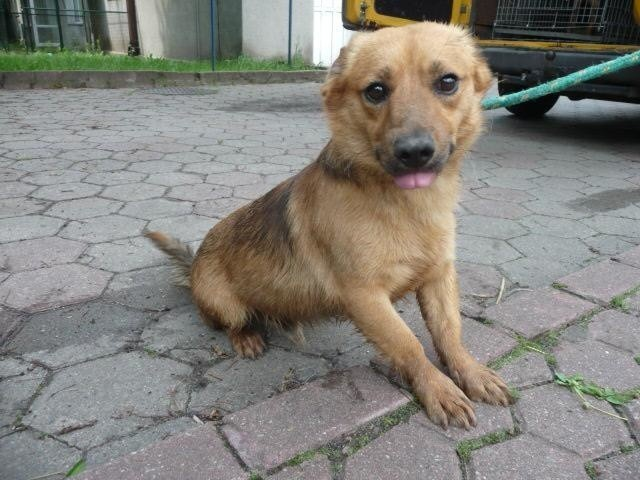 Te psy trafiły w lipcu do toruńskiego schroniska dla zwierząt. Czekają na nowy dom.  Zobacz zdjęcia i przygarnij zwierzaka.>>>>>>>ZOBACZCIE GALERIĘ