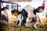 Cena mleka spadała od początku roku. W końcu zaczęła rosnąć