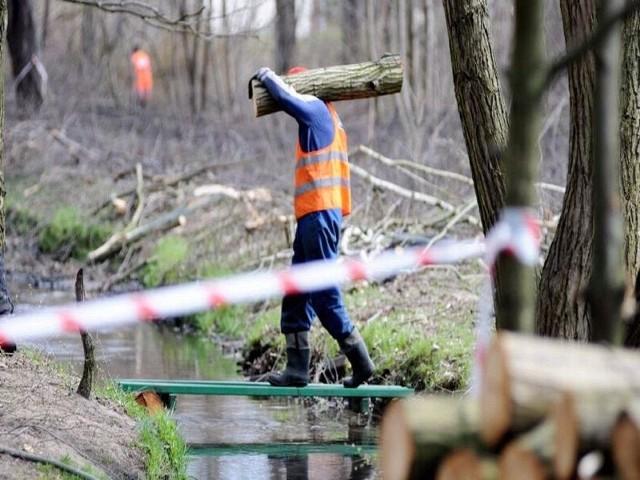 Pracownicy firmy Diament porządkują teren wokół stawów