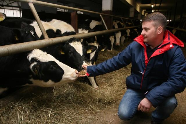 Poza stadami trzody i krów, w gospodarstwie hodowane są cielaki, jałówki i opasy. – Nie sprzedajemy cielaków. Jałówki utrzymywane są na krowy, to najtańszy sposób na rozwój stada. Byki są sprzedawane, kiedy osiągną masę 800 kilogramów, wtedy jest największy zysk- tłumaczy właściciel gospodarstwa.