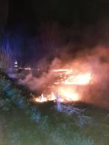 Coraz więcej pożarów traw. A później płoną lasy. I można stracić życie (ZDJĘCIA)