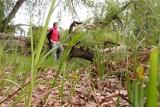 Nie chcesz złapać kleszcza? Nie zabieraj smartfona do lasu - radzą naukowcy z Polski i Słowacji