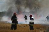 Pożar chlewni w Rakoniewicach. Z ogniem walczyło 10 zastępów straży pożarnej