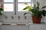 Czy jesteś mordercą roślin domowych? A może masz zadatki na prawdziwego ogrodnika? SPRAWDŹ!