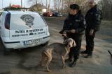 Bili i głodzili dwa psy w mieszkaniu na Bałutach. Właściciele staną przed sądem