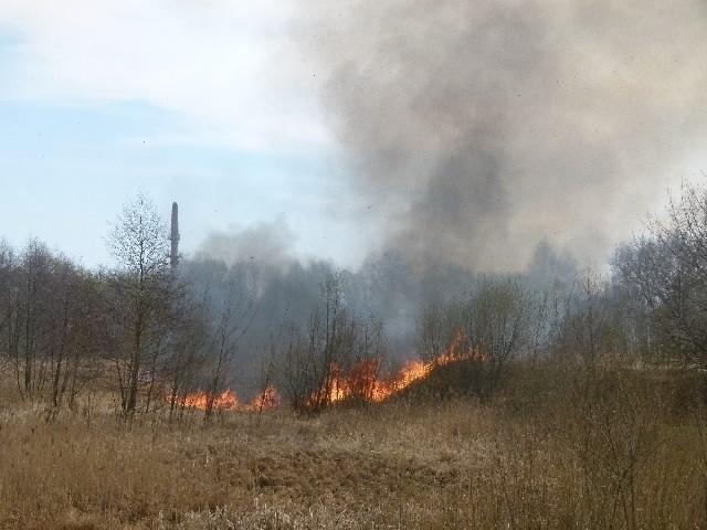 Pożar traw przy ul. Pabianickiej
