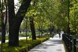 Pięć ulic Wrocławia, które będą jeszcze bardziej zielone. Tu posadzą najwięcej drzew i krzewów