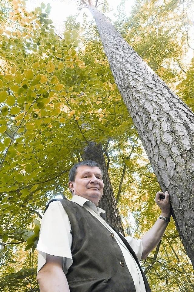 Rzeczywiście drzewa, które pokazuje nam nadleśniczy Jan Rurek robią majestatyczne wrażenie