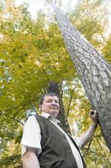 Tajemnicze i niezwykłe miejsca w naszych lasach: Drzewa wysokie do nieba