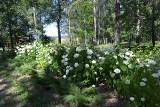 Park Chrząstówka w Jaworznie to piękne miejsce na spacer