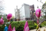 Arboretum Kórnickie otwarte dla zwiedzających, ale są ograniczenia. Sprawdź zasady zwiedzania