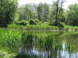 Nie będzie rewitalizacji pięknej wyspy na stawie w kompleksie zamkowo–parkowym w Międzyrzeczu