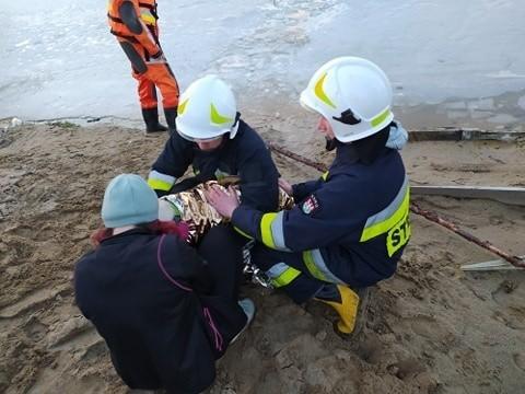 Strażakom udało się wydostać psa z przerębla i bezpiecznie ewakuować na brzeg