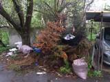 Awantura o śmieci na Sępolnie. Miasto zabiera kubły