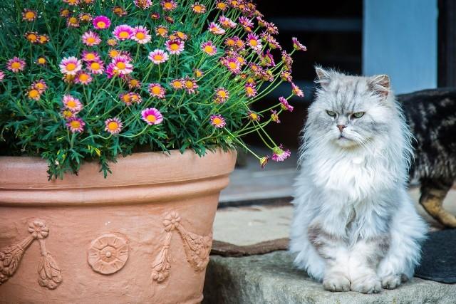 Najśmieszniejsze rasy kotów. Te kotki rozbawiają do łez!