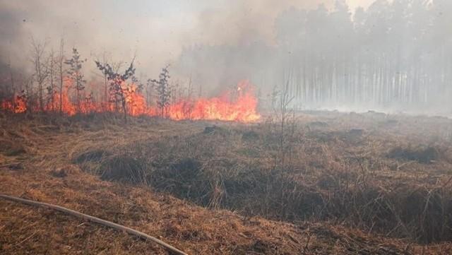 Spłonęło łącznie 35 ha lasu