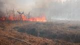 Potężny pożar w Nadleśnictwie Włodawa. Spłonęło kilkadziesiąt hektarów lasu