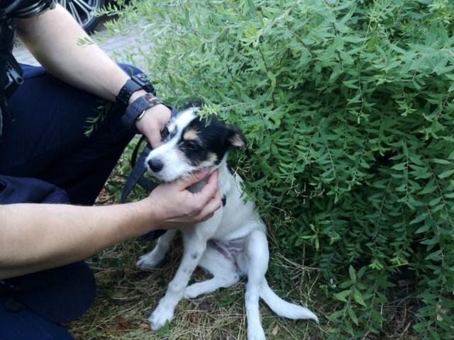 Policjanci z Sopotu uratowali psa uwięzionego w samochodzie podczas upału