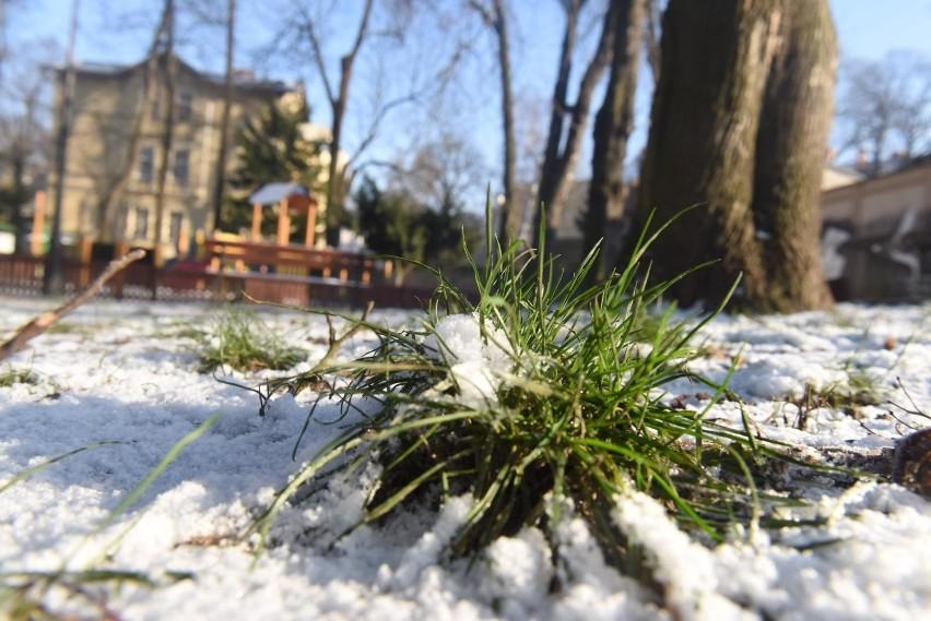 Pierwszy atak zimy już w październiku?Nie jest wykluczone, że pierwszych przymrozków możemy się spodziewać pod koniec października.