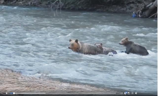 Stop klatka z filmu zamieszczonego na stronie Naleśnictwa Baligód, na portalu Facebook.