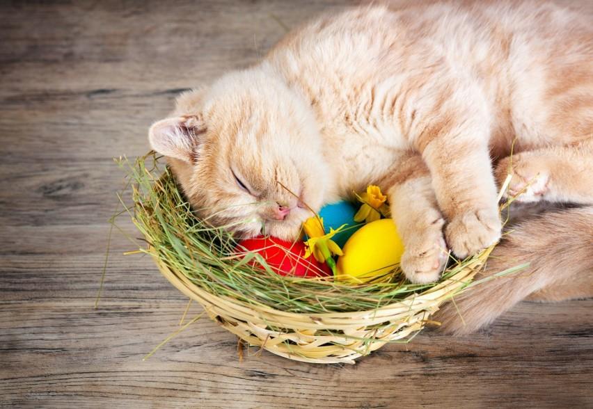 Życzenia na Wielkanoc 2018: krótkie, śmieszne, poważne. Najlepsze życzenia wielkanocne SMS [WIERSZYKI, ŁAŃCUSZKI, RYMOWANKI]