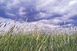 Pogoda. Słoneczna środa w Lubuskiem, choć bez upałów. Termometry wskażą 23-24 stopnie Celsjusza [29.07.2020]