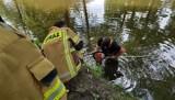 Strażacy pomogli chłopcu, którego aparat słuchowy wpadł do stawu w Rzeszowie. Takie urządzenie kosztuje aż 150 tys. złotych!