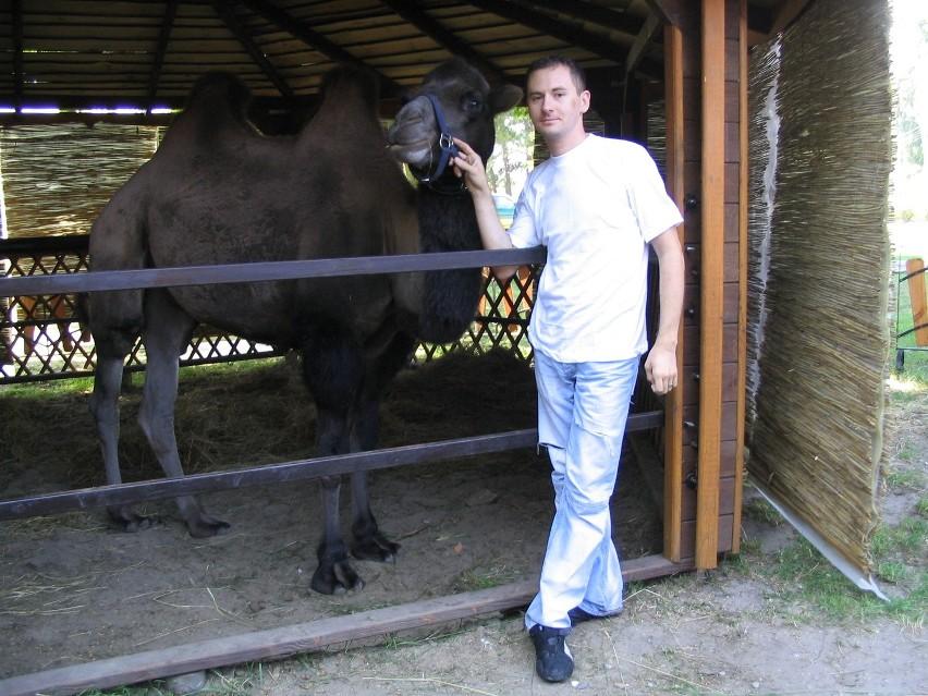 Norbert Dąbek, właściciel wielbłąda Czestera twierdzi, że nie mógłby zrobić krzywdy zwierzęciu. Jego zdaniem ludzie krytykują, że wielbłąd stoi w smażalni ryb, gdyż nie wiedzą, że jest to oswojone zwierzę, które urodziło się w Polsce.