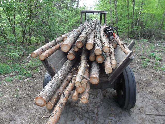Goworowo. Dwaj mężczyźni przyłapani na kradzieży drzewa z prywatnego lasu
