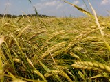Pierwsze komisje już szacują straty w uprawach. Susza w Polsce