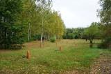 Rosną kolejne drzewa w Lesie Młodej Łodzi - sadziły je całe rodziny!