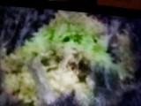 Lutol Suchy. Pan Czesław spojrzał na drzewko i ujrzał twarz, która przypominała do złudzenia Matkę Boską. Czy to było objawienie?
