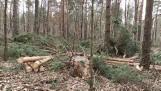 Władze Kielc spotkały się z leśnikami. Rozmawiali o ochronie miejskich lasów