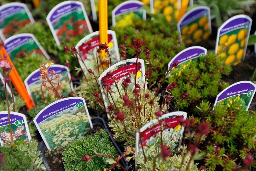 Kwiaty Na Balkon Jak Urządzić Piękny Taras Lub Balkon