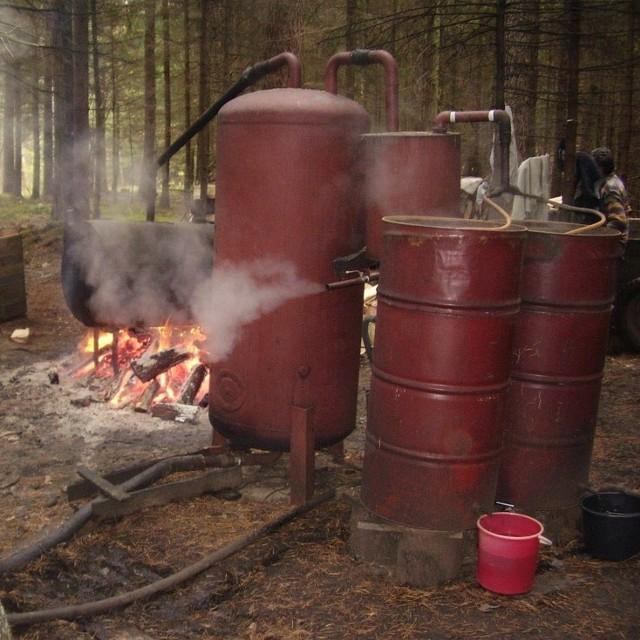 Bimbrownicy zdążyli wytworzyć 85 litrów 25-procentowej surówki.
