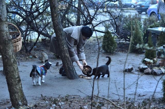 Rozwiązaniem problemu bezpańskich zwierząt i konfliktów między sąsiadami mogą być budki dla wolno żyjących kotów ustawiane przez poznańskie schronisko. Tych w całym mieście jest ok. 120