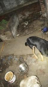 Pies zamknięty w piwnicy. Wokół pełno śmieci i psich odchodów! Zobacz jak trzymali zwierzę (ZDJĘCIA)