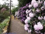 Pomysł na weekend. Kwitnące rododendrony i inne rośliny w Ogrodzie Botanicznym w Zagwiździu. Zdjęcia z tego niesamowitego miejsca pod Opolem