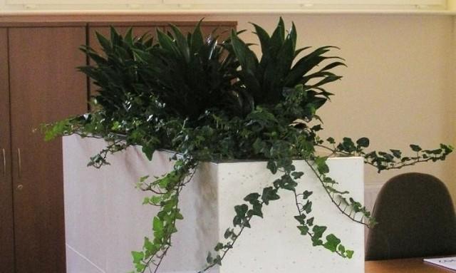 Kwiaty w biurzeKwiaty stanowią gustowny dodatek, gdyż mogą przyczynić się do wzmocnienia wizerunku firmy. Odpowiednio dobrane, zadbane kwiaty ozdobią biuro i wniosą do niego odrobinę natury. Wnętrze ozdobione kwiatami staje się bardziej przyjazne a kolor zielony po prostu uspakaja.