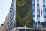 Największa w Katowicach zielona ściana gotowa. Będzie jeszcze druga. Obie na hotelu, który powstał przy Młyńskiej