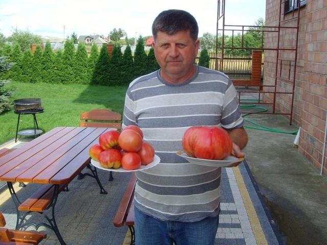 Ten jeden pomidor waży tyle co tych 10 obok – mówi Jan Rokicki z Głuszyna w gminie Klwów.