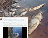 Śnięte ryby w Wiśle? Europosłanka Beata Mazurek udostępnia filmik, na którym jest... lubelskie jezioro