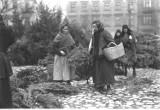 Sprzedaż choinek i gałązek choinkowych w Krakowie [ARCHIWALNE ZDJĘCIA]