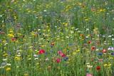 Kolorowo i pachnąco. Kolejny sezon kwietnych łąk w Lublinie. Zobacz gdzie powstaną